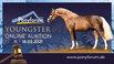 Ponyforum: Nächste Online Youngster Auktion im Februar
