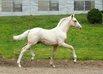 Ponyforum startet 1. Ponyfohlen-Onlineauktion