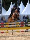 Fünf Weser-Ems-Ponys stehen im Finale